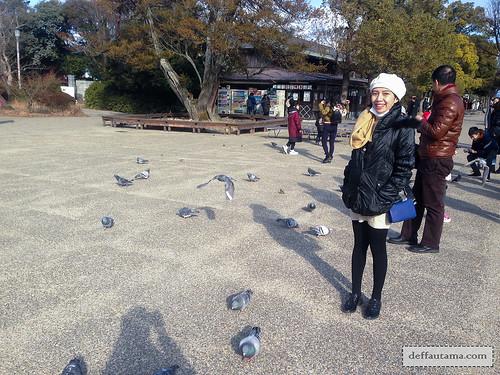 9 Hari Babymoon ke Jepang - Pigeons | by deffa_utama