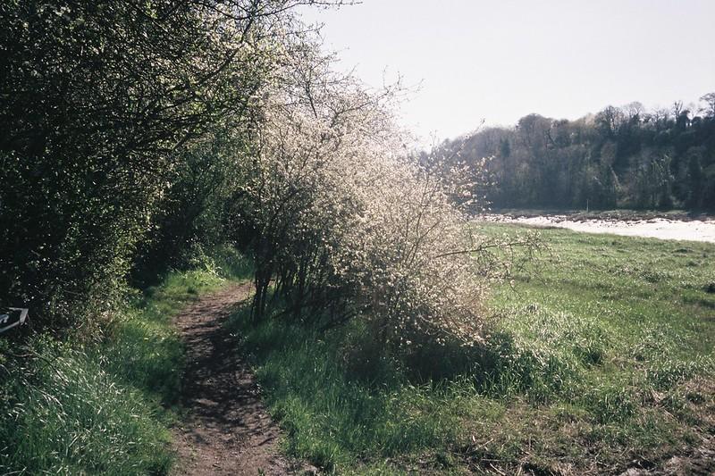 Spring path, Sea Mills