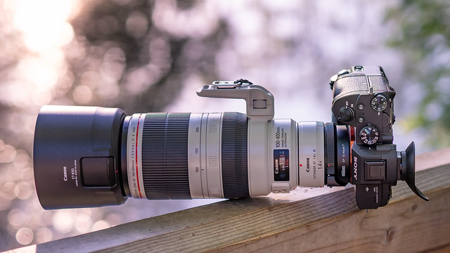 SONY ⍺7III & Canon EF100~400/4.5~5.6L IS II & EF1.4x III on Metabones T Mark V seen by SONY ⍺6500 & Sigma 50mm ƒf/1.4 DG HSM | Art on MC-11