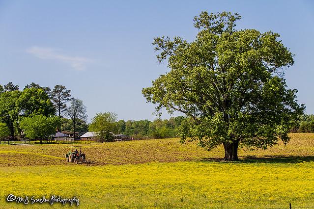 Farming | Piperton, Tennessee