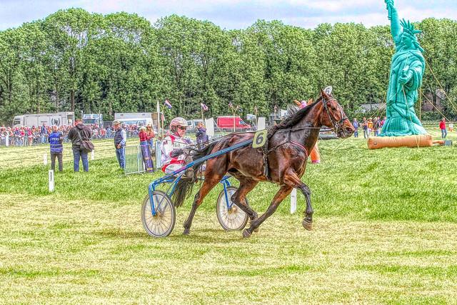 Dagje paarden