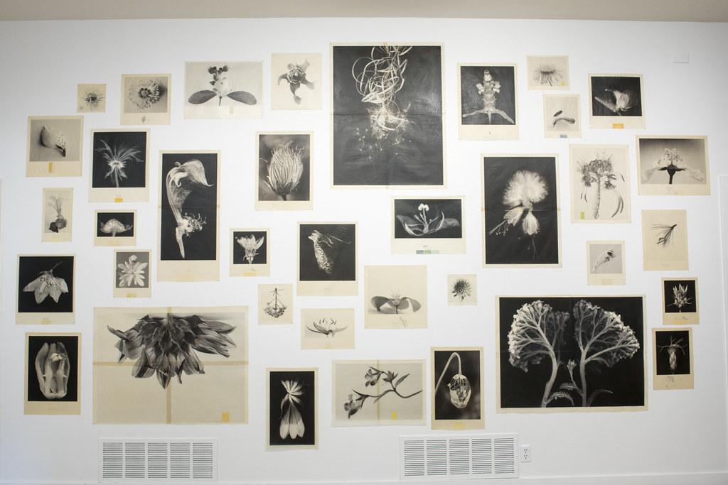 Bees Exhibit_088