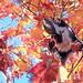 秋色の食卓