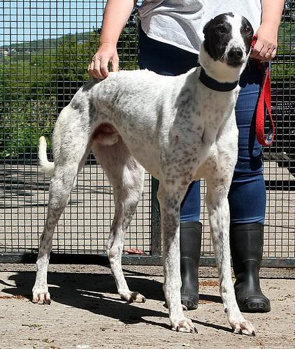 jaffa11   by Greyhound Gap