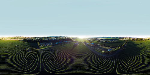 Awatere Valley Vineyard | by Saint Clair Family Estate