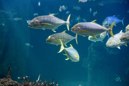 Sea Life Sydney Aquarium | by ndimmock