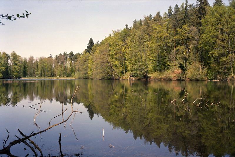 See mit Spiegelung auf dem Wasser umgeben von Wald