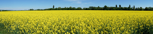 Le bonheur est un bien que nous vend la nature. Il n'est point ici-bas de moisson sans culture  (Voltaire)