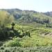 Le jardin de thé