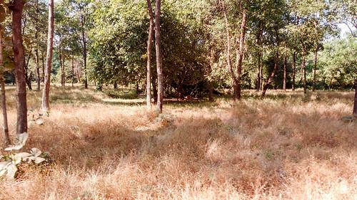 dadraandnagarhaveli india geotagged satmaliadeerpark silvassa deerpark