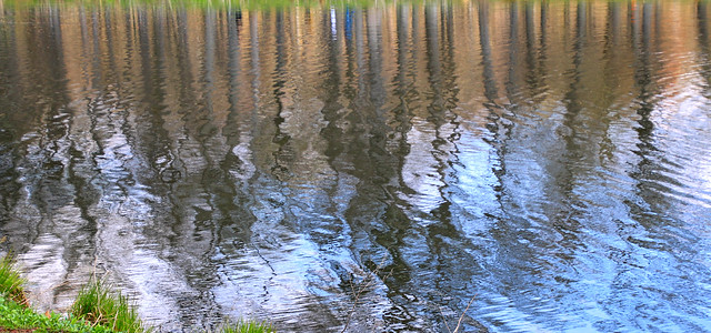 Spring Water Reflection