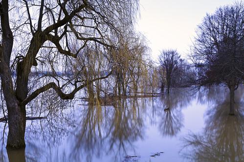 flood trees park water melt reflection spring printemps stjohnriver fredericton river silhouette bench newbrunswick nouveaubrunswick maritime maritimes atlanticcanada canada canon canoneos canon6d