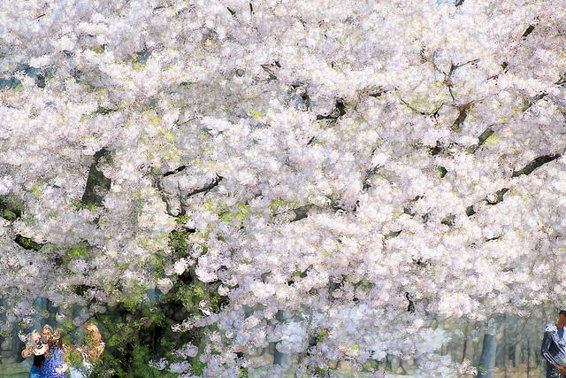 Fantasy Blossoms