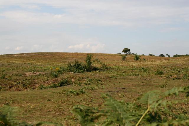 Heathland near Snape
