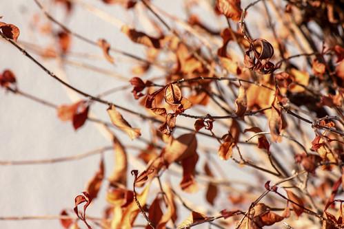 wonder eos explore express red yellow orange pr ponce planet plants planes plantas skies florida flowers flores flor flower flora nature natural naturaleza leaves hojas blue