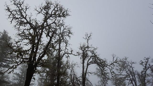 Misty Titans