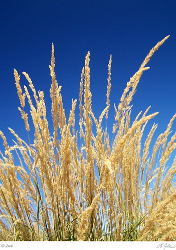 grass gis ©allrightsreserved pixability polarixingfilter bgoldman gettysubmitted