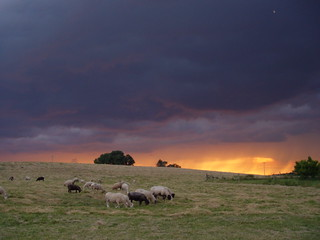 Sheep in front of Stormy Sky | by Misty DawnS