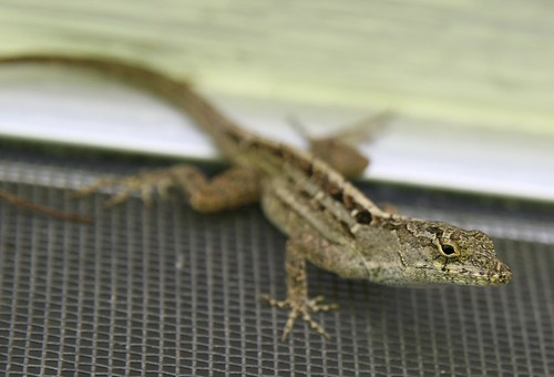 canon florida screen lizard porch 30d tamron2875mmf28