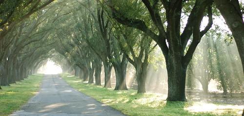trees sunlight nature sunrise nikon driveway d80 nikonstunninggallery nikonstunning nikond80