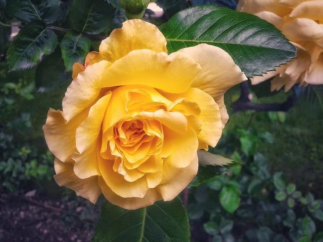 Glamorous yellow
