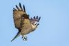 Osprey Landing Gear Down by jeff_a_goldberg
