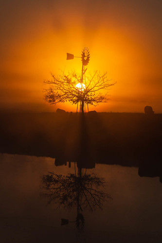 richmondlowlands newsouthwales australia au sunrise windmill tree silhouette dawn cow reflection pond dam nsw sydney richmond lowlands