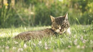 20180508-182940 Cat Garden Bokeh | by torstenbehrens