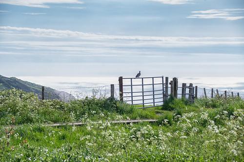 fencefriday fence pigeon gate seamist boardwalk hastingscountrypark