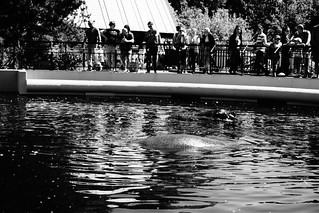 Hippopotamuses, A Day at the Zoo | by Andrew Milligan sumo