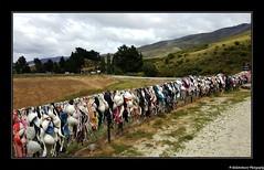 """Une série sur notre """"Road Trip"""" en Nouvelle-Zélande- Cardrona- Nouvelle- Zélande."""