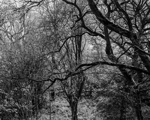 ancient woodland rural northeast black white bw landscape trees light shadow monochrome largeformat 4x5 5x4 toyo45a