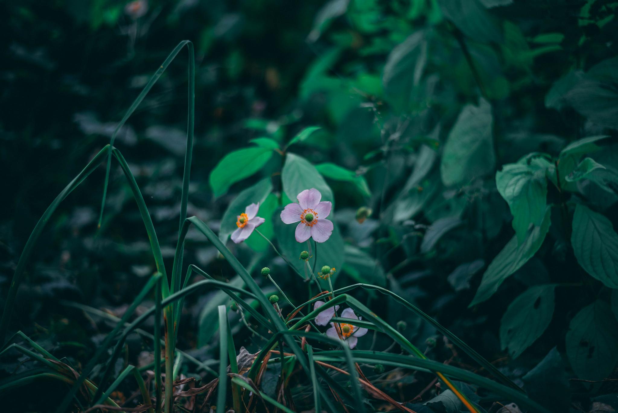 Single flower in October