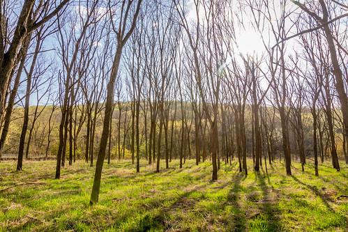 oxbowpark woods landscape