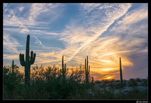 arizona cacti cactus clouds cloudy desert estrellla goodyeararizona kenmickelphotography landscape landscapedesert outdoors plants saguaro sunsets backlighting backlit nature photography goodyear unitedstates us sky