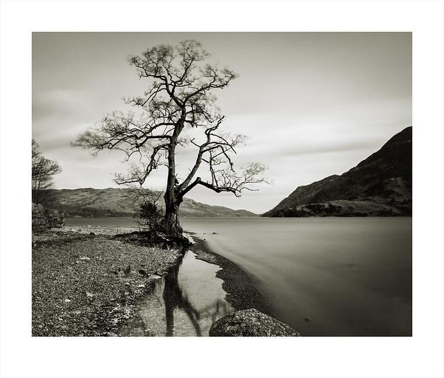 Lone Tree. Ullswater, Cumbria.