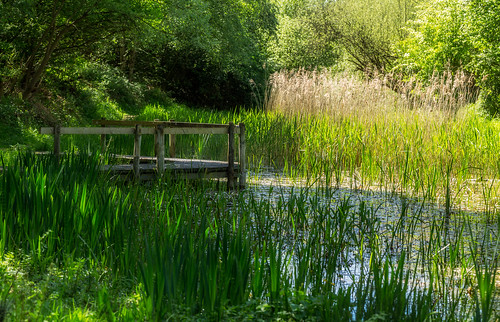 pottericcarr yorkshirewildlifetrust pond pool green lush canon6d ef100mmmacrois water rushes
