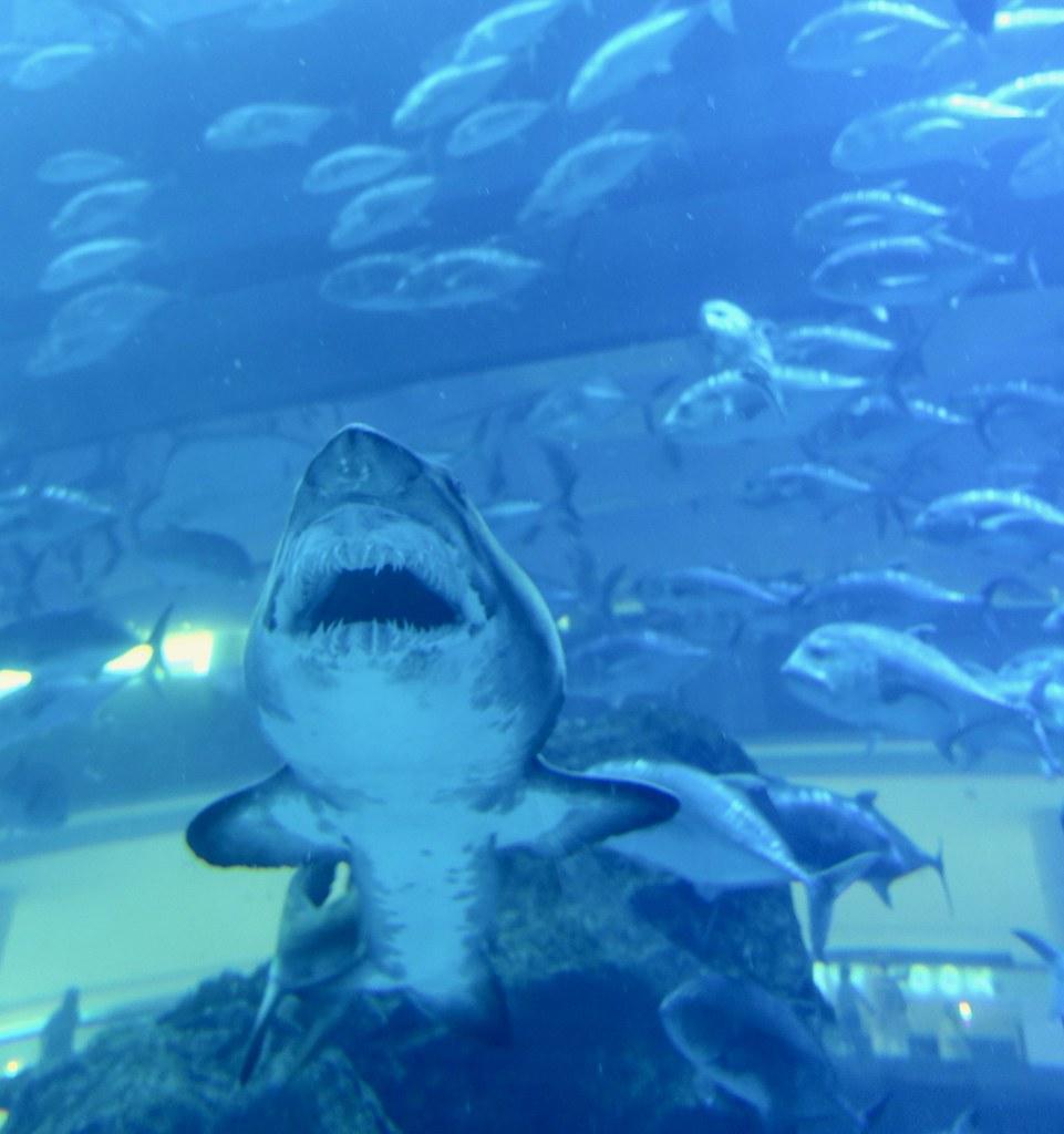 Dubai aquarium shark