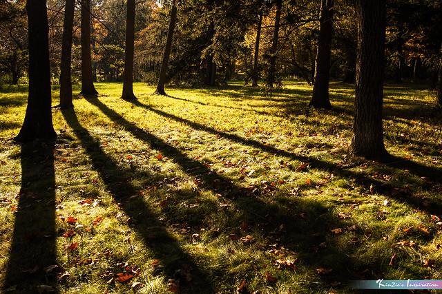 Visual of Nature *A Beautiful Nature*
