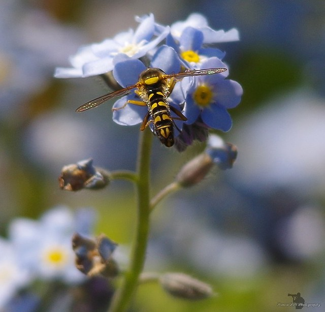 forget me not and bug (3)