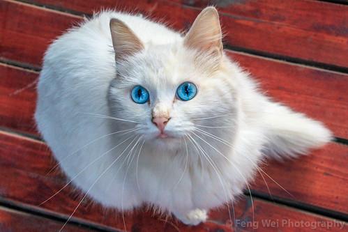 curiousity curious highangleview asia travel cute feline cat outdoors colorimage zhejiangprovince hangzhou chinaeastasia horizontal zhejiang china cn