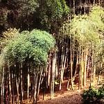 竹林…北九州市は竹林面積割合日本一。 北九州市小倉南区合馬 おうま で採れるタケノコはブランドで 京都の料亭へ出荷されてる。 一応人口97万人九州第二の都市 昭和40年代は一位w福岡市より先に政令市になった。