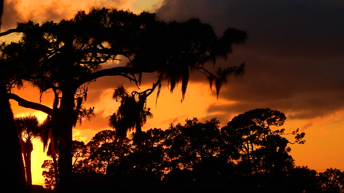 sunset sundown dusk sun evening endofday sky clouds color red gold orange pink yellow blue tree palm outdoor silhouette weather tropical exotic wallpaper landscape nikon coolpix p900 jimmullhaupt manateecounty bradenton florida cloudsstormssunsetssunrises