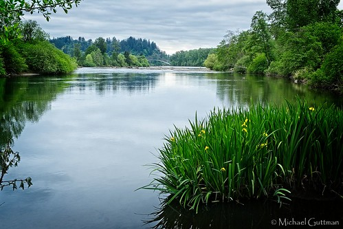 river willametteriver springfield oregon eugene trees water cloudyskies refllections islandpark bridge sky clouds spring fujifilm xt2
