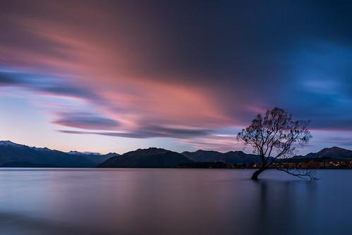 newzealand wanakatree