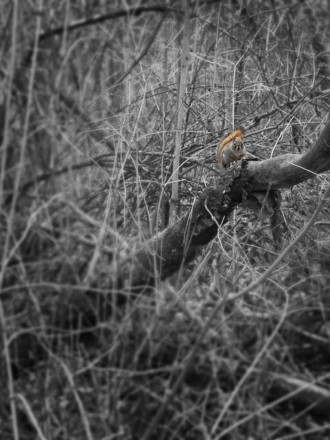Cottonwood Island Park_03