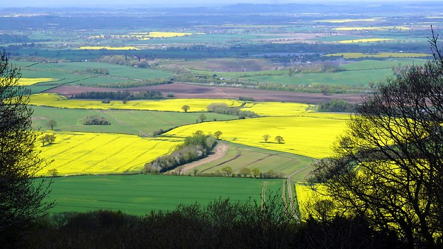 The fields of Shropshire