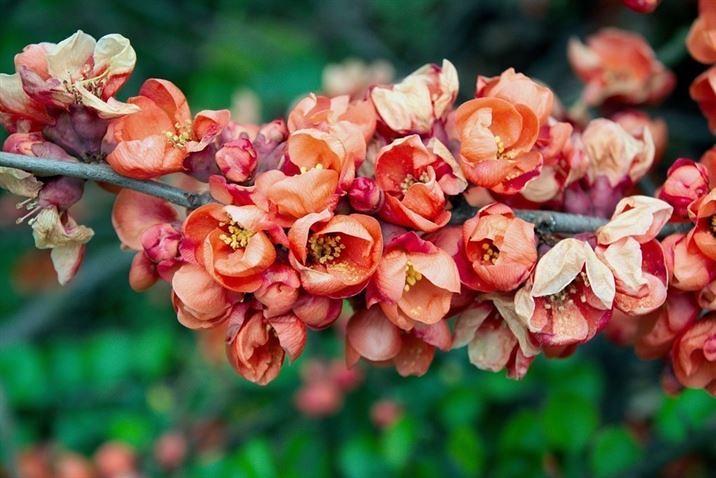 Iphone X Flower Wallpaper Hd 2018 Nr75 Iphone X Flower Wal Flickr