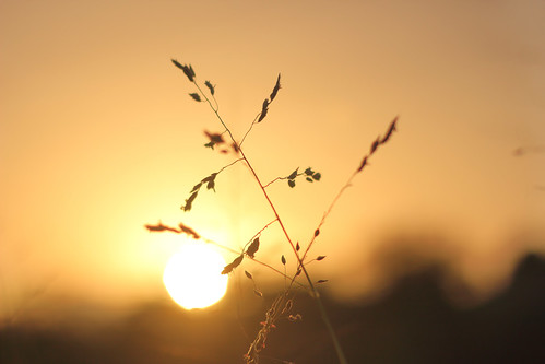 glow sunset dusk dof silhouette debmalyamukherjee 50mm anushaktinagar