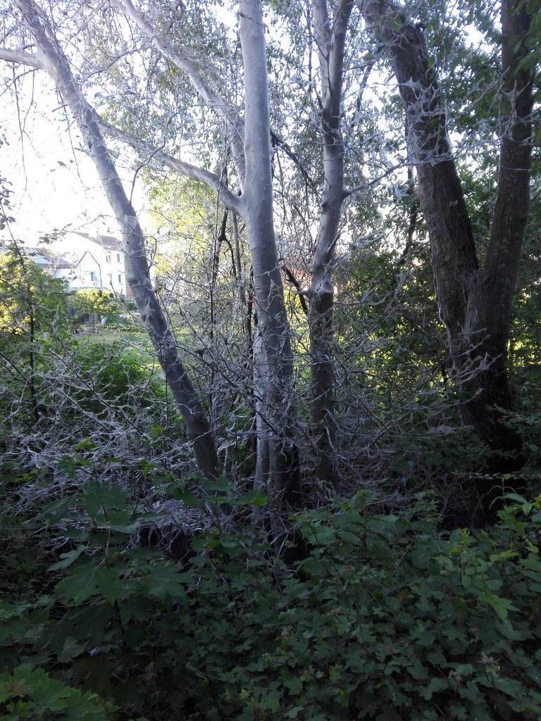 Eingesponnene Bäume